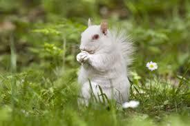 white squirrels trinity